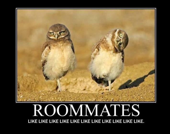 Roommate Jokes