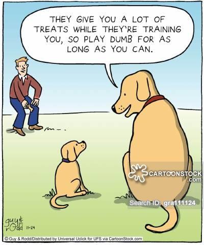 Image result for training jokes