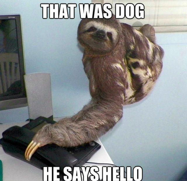 Best sloth Jokes