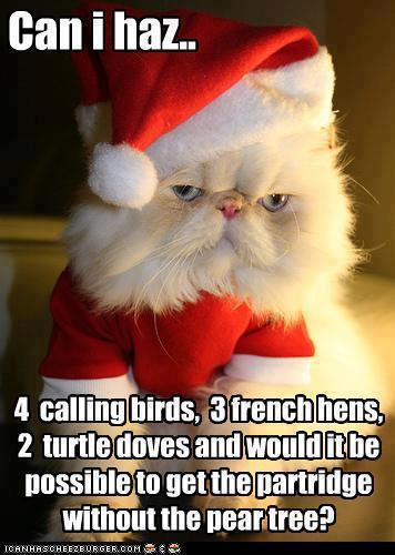 Cat christmas Jokes