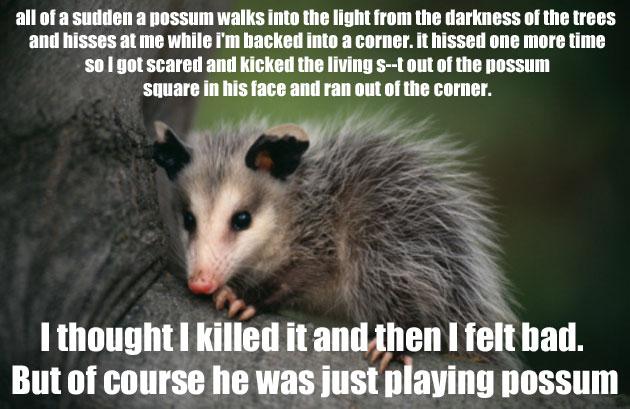 aa85e359444be2513201fd511171d0e8 possum jokes