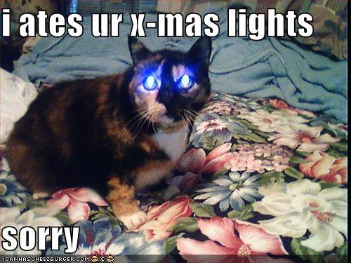 Christmas cat Jokes