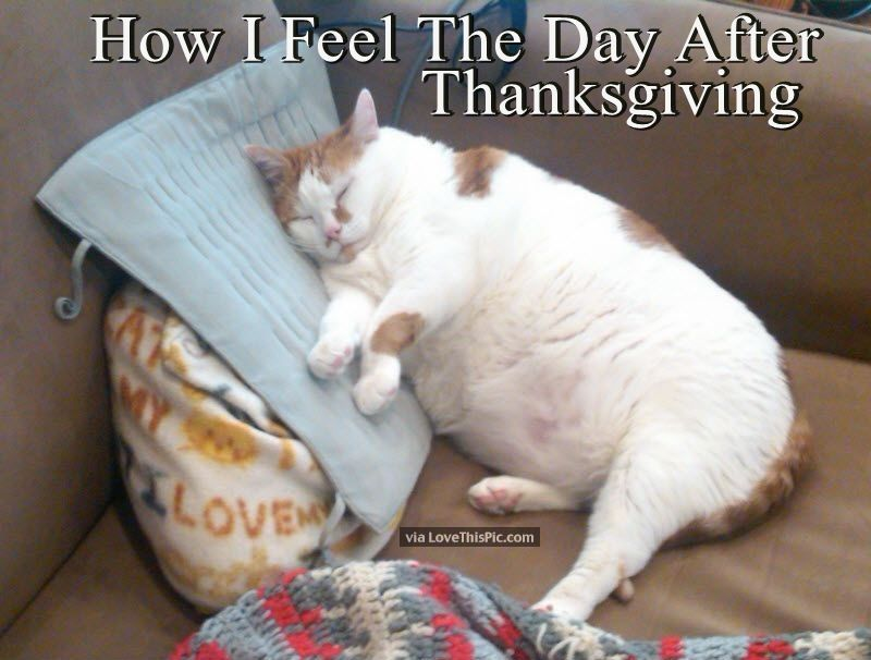 Thanksgiving Fat Jokes