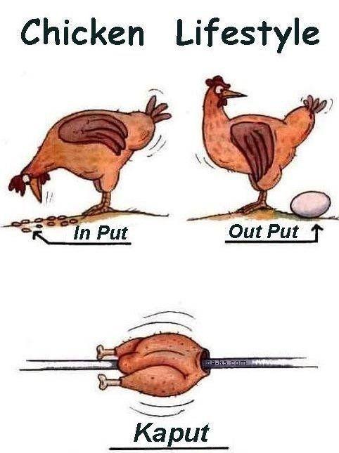 Short Chicken Jokes