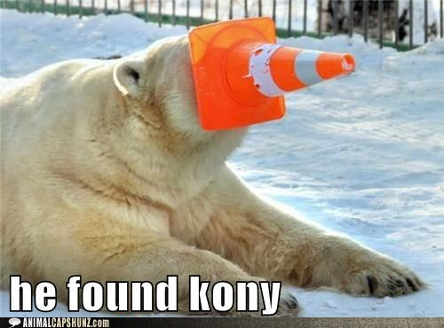 funny polar bear jokes