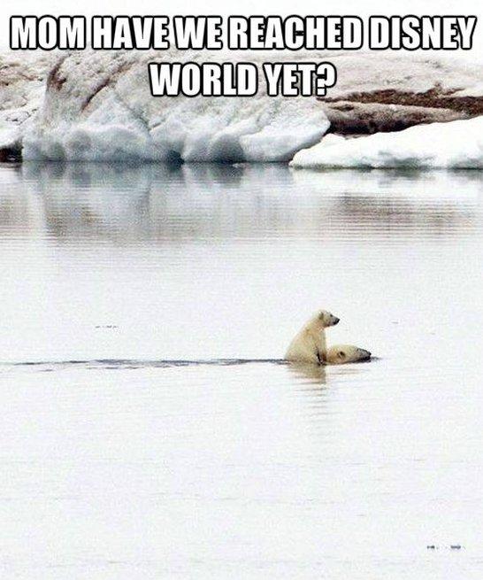 polar bear jokes